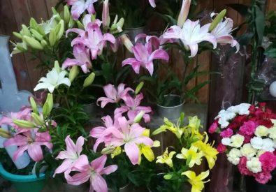 Shagun Florist and Flower Decoration